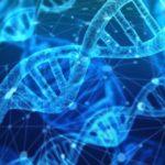 YAP遺伝子は宇宙人と関係がある!?そのルーツとは…